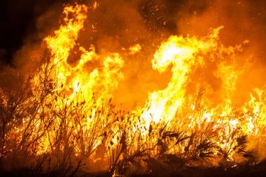 FREE FIRE STOCK 5616 x 3744 pix by Wizardinc