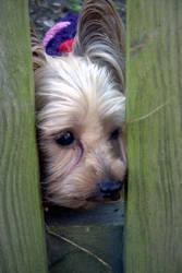 Fenced in by gigglebug