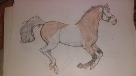 Horse Adopt (open)
