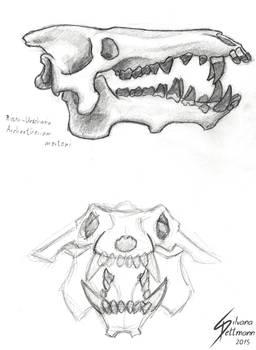 Archaeotherium skull study