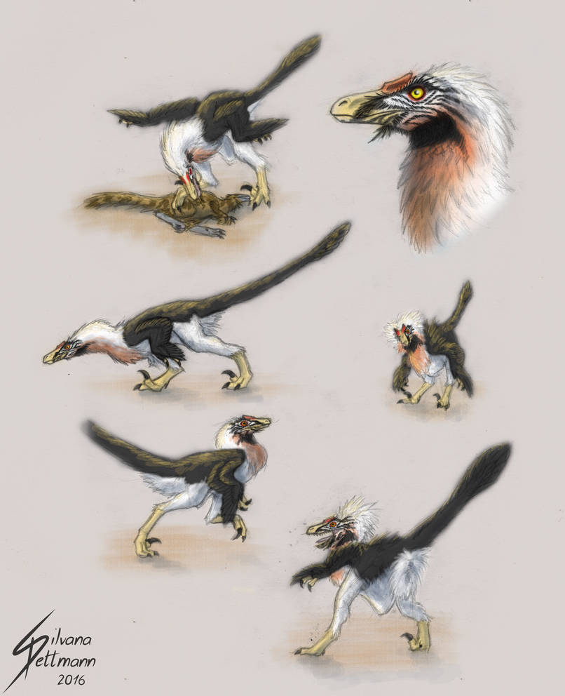 Velociraptor studies