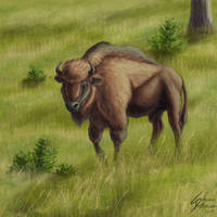 Wisent (European wood bison) by Dragunalb