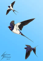 Swallows by Dragunalb