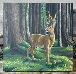 Roe Deer Fadri