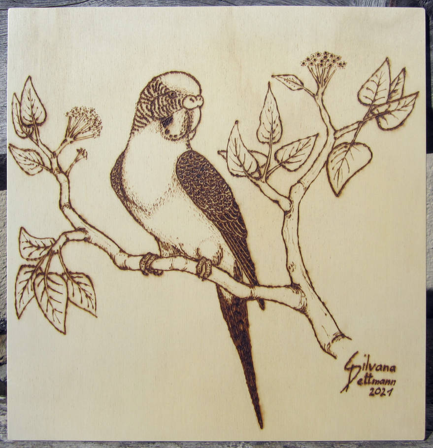 Budgie pyrography
