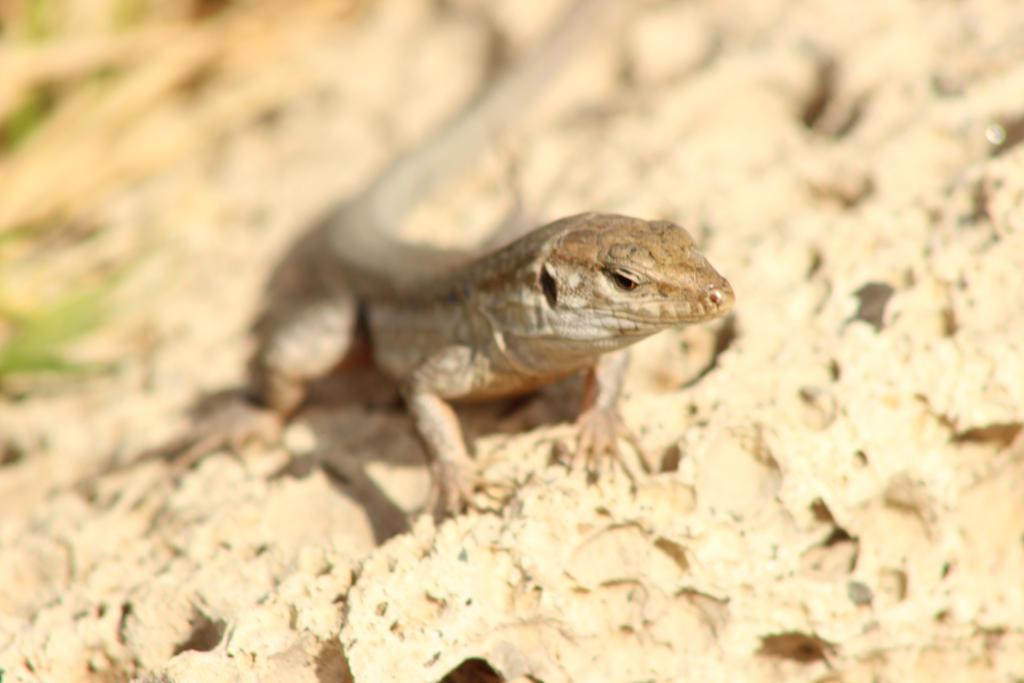lizardy thing by karliosi