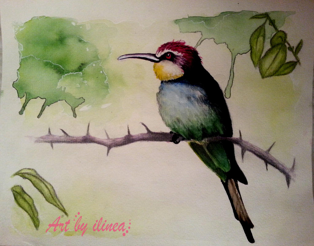 Bee-eater by ilinea