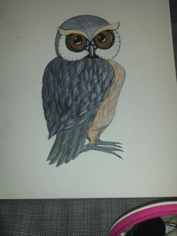 Mr. Owl. by miine