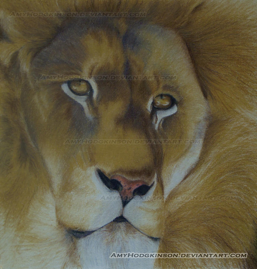 Golden Lion by AmyHodgkinson