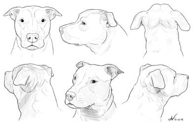 Pitbull Head Angles by Atropicus