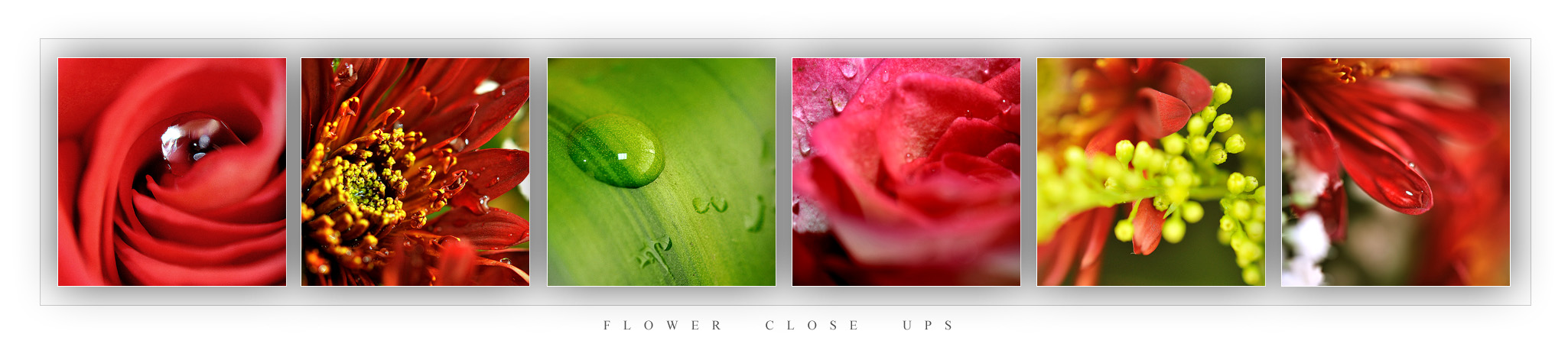 Flower Close Ups by AnubisGraph