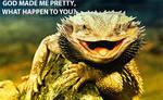Lizard by komodovis