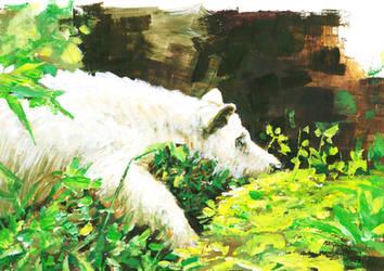 Sleeping Bear by paraberio
