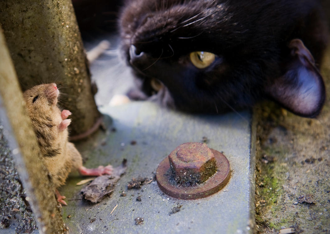 Tai Chi Mouse And Gizmo by Glenn0o7