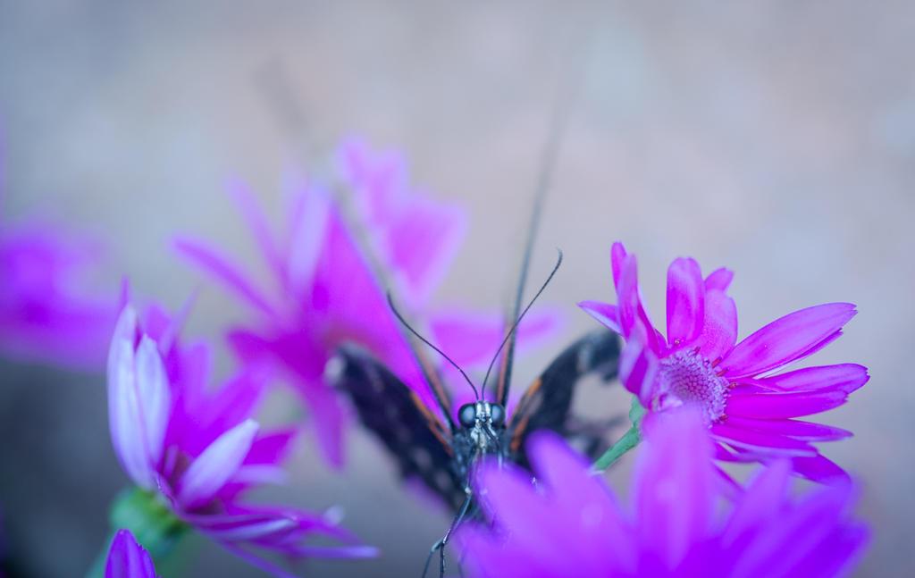 The pollin by Glenn0o7