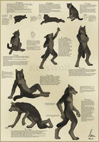 Werewolf - 9 Stages of Life