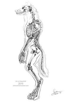 Werewolf Skeleton