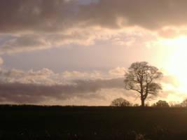 Horizon by Bowdy