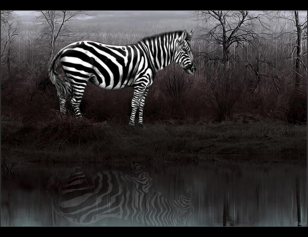 Black n White lines ... by tasa78
