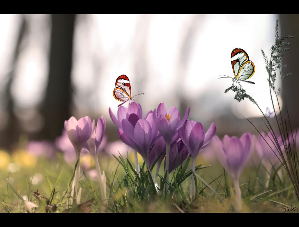 Silent Wings... by tasa78
