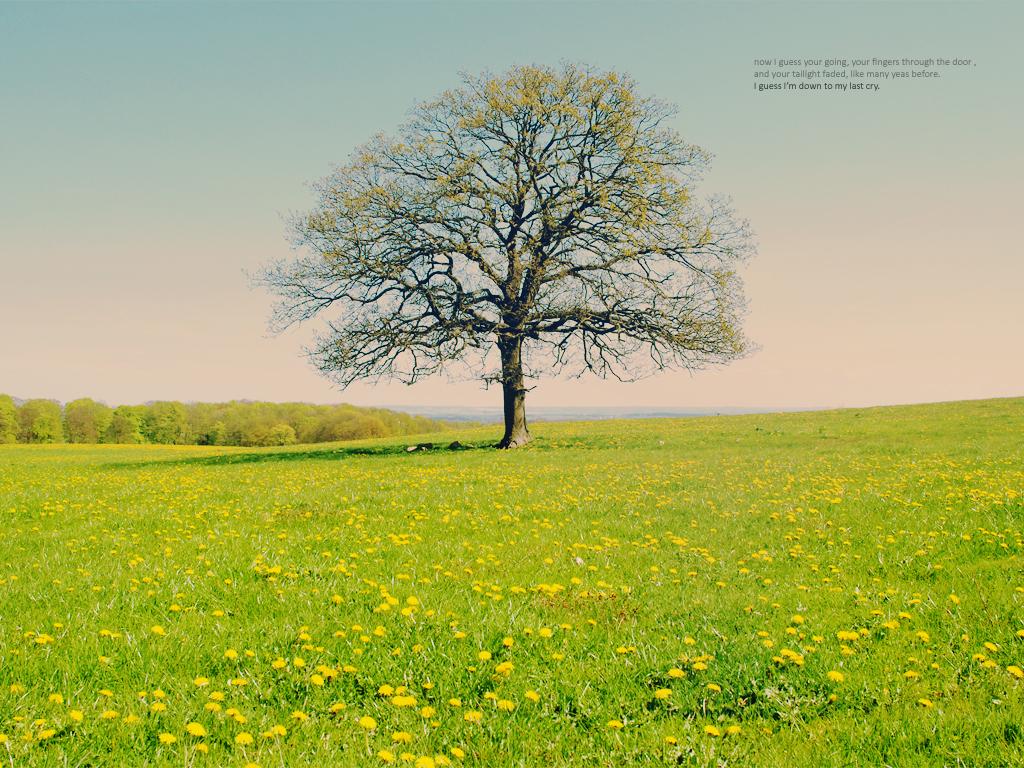 Garden of bliss by ella-marie
