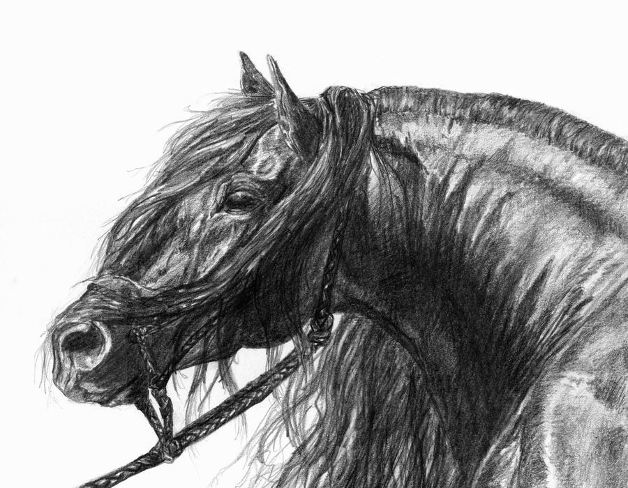 Horse by ShiningForceKaya