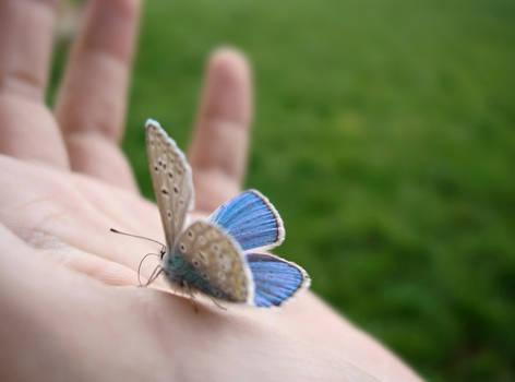 The Wings of Faith: Metamorphosis