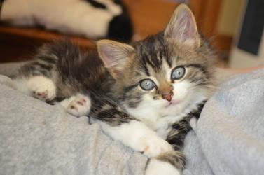 Kitten Poser by Deepsies