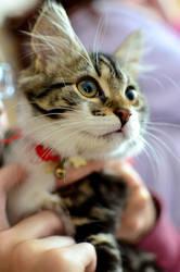 Cat by Deepsies