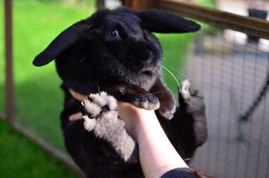Ebony Bunny by Deepsies