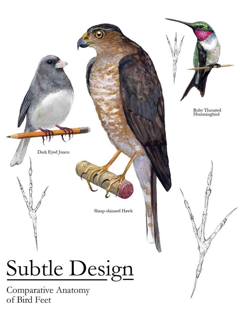 Bird Anatomy Comparison by Kruggar on DeviantArt
