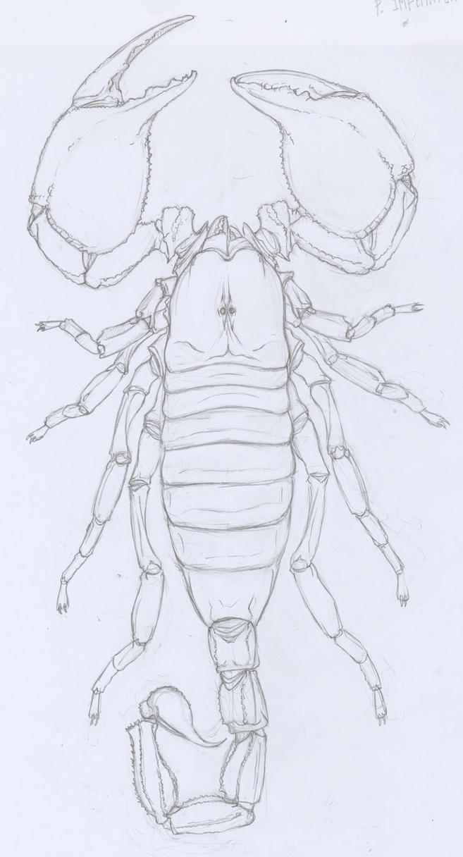 Emperor Scorpion by Kruggar on DeviantArt