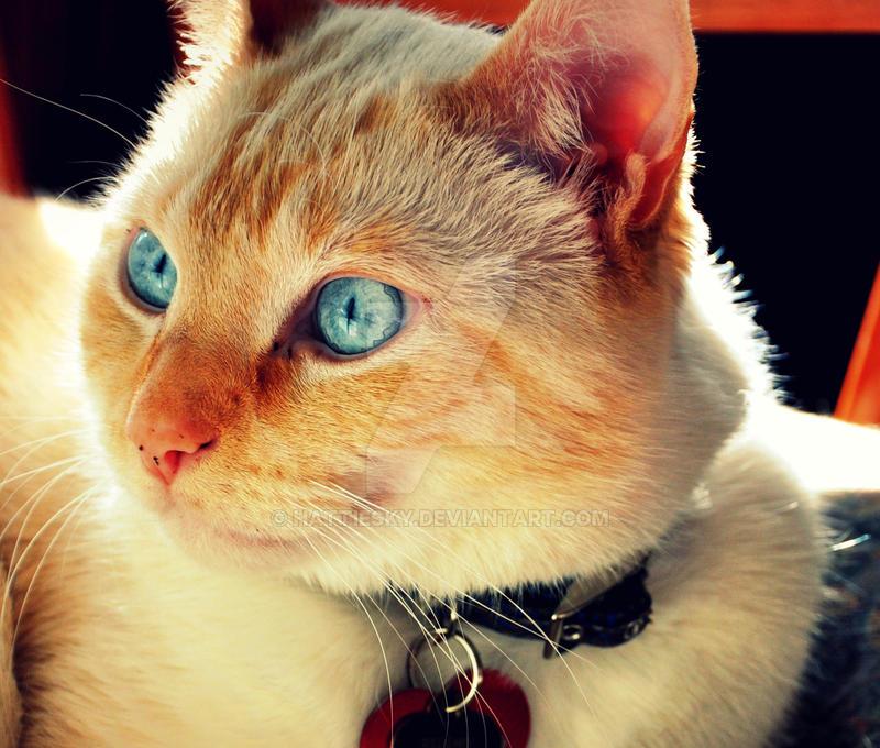 Close up Sunny by hattiesky