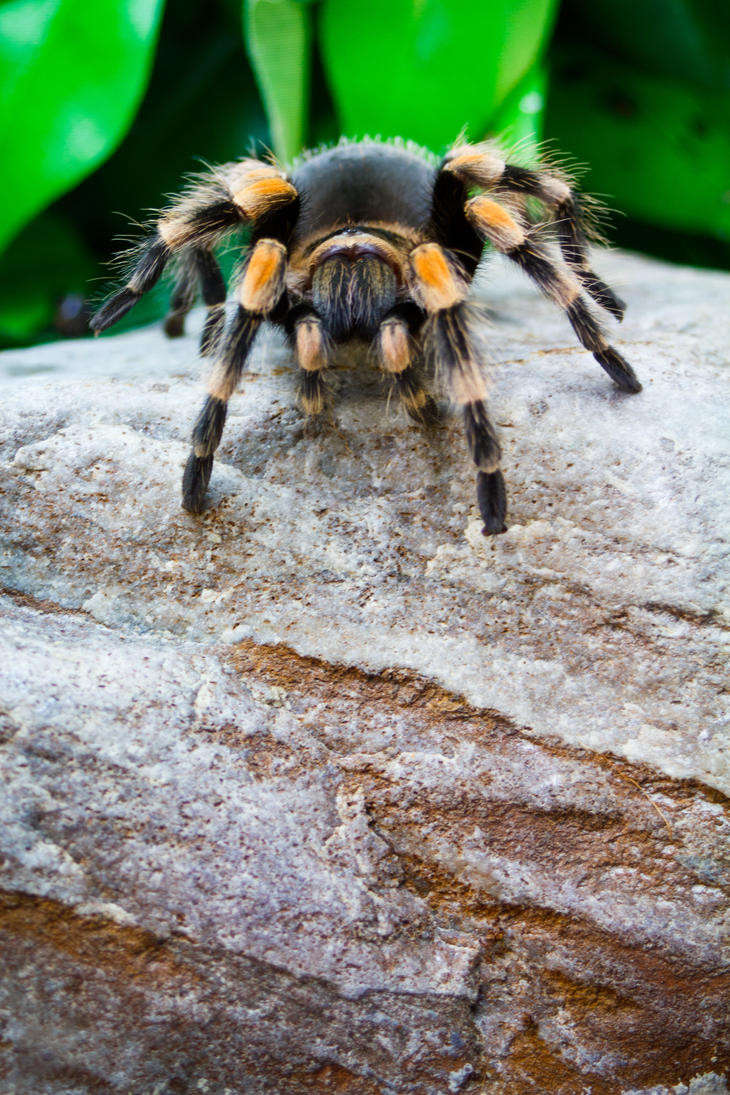 mr smithi by biggoofybastard