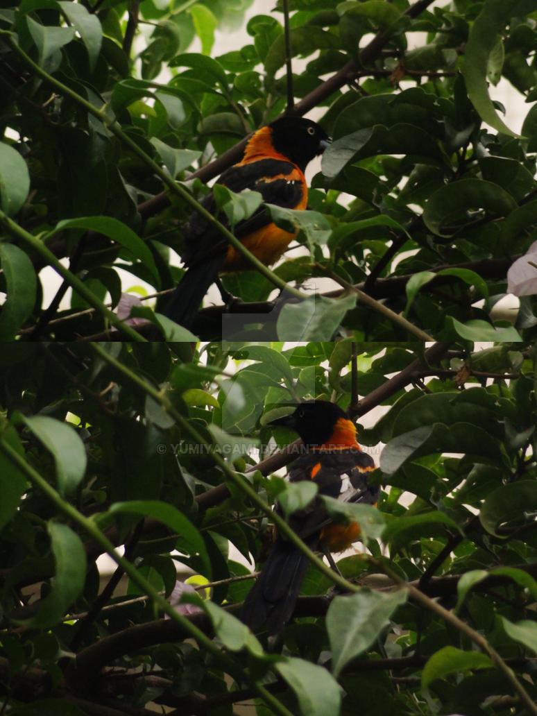 the_orange_bird_by_yumiyagami-d7gqugd.jpg