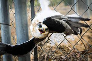 defensive hawk by pungen