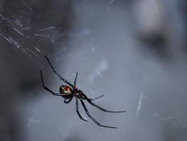 black widow by pungen