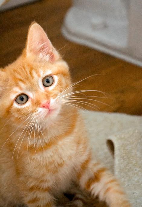 Baby Rupert by pungen