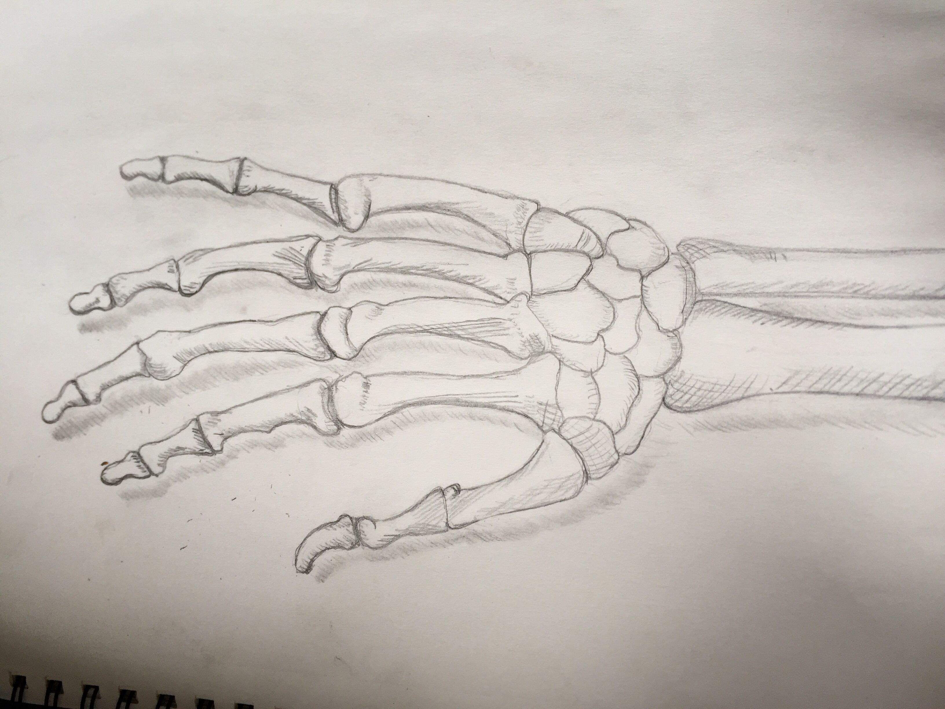Skeleton Hand Drawing By Bioniquanne1 On Deviantart