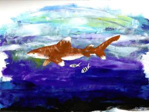 FP Oceanic Whitetip Shark