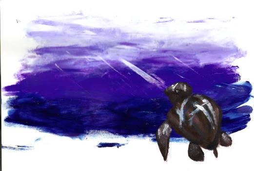 FP Leatherback Turtle