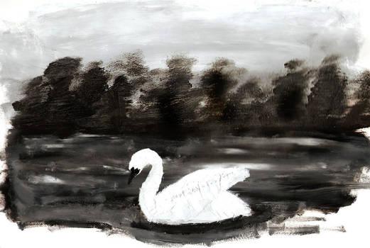 FP Swan