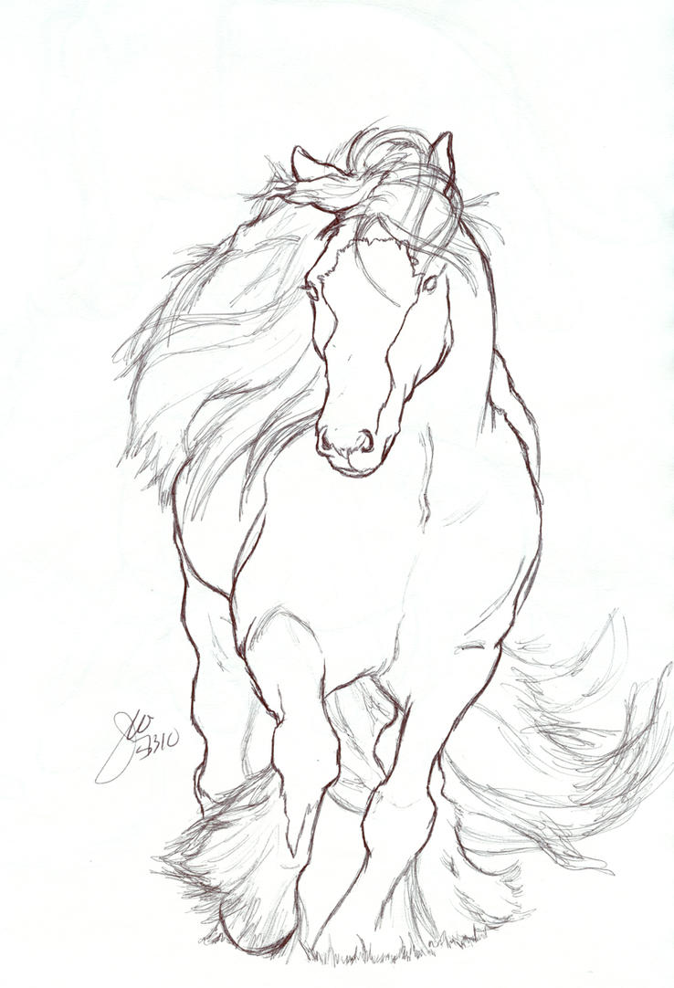 Contour Line Drawing Animal : Gypsy vanner contour by elipse on deviantart