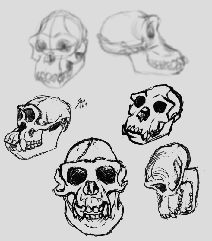 chimpSkullStudies2 by elipse