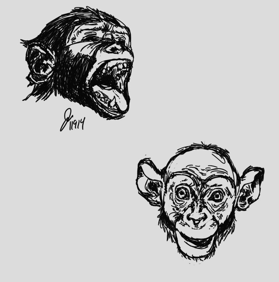 chimpFaceStudies by elipse