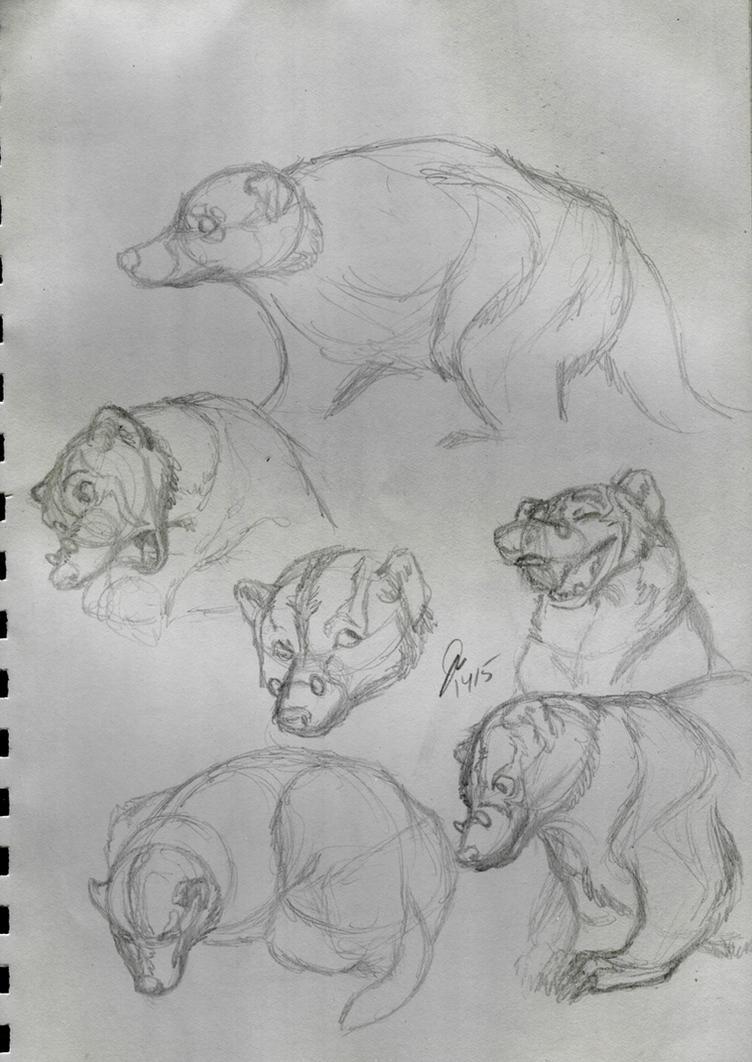 Cecil Studies by elipse