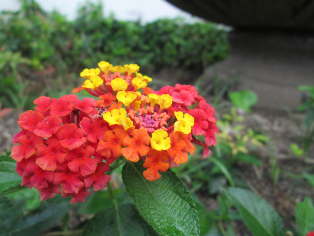 small multi-colored flowers (3) by qwe304 on DeviantArt