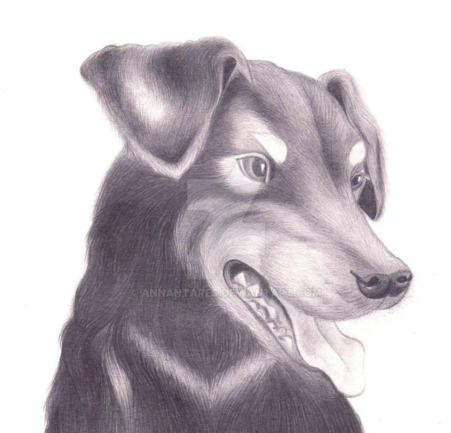 Puppy by AnnAntares