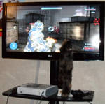 I can has Halo 3