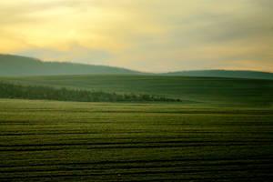 Field of Morning by Destroth